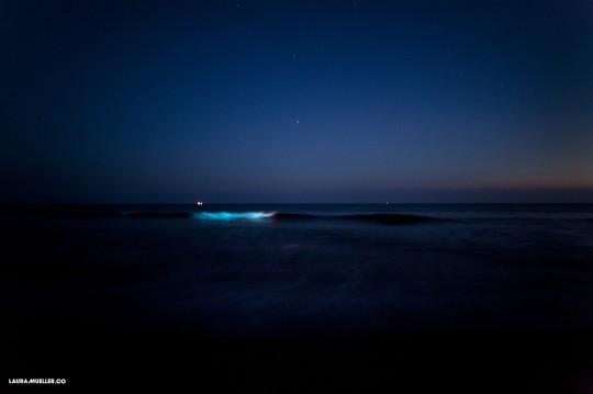 Meeresleuchten vor Sylt (Foto: Laura Müller)